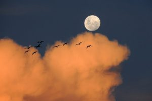 Kinijos palydovas rengia sąlygas pirmai misijai į nematomą Mėnulio pusę