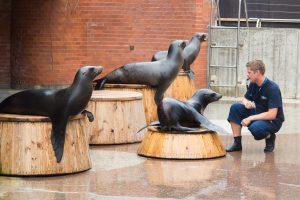 Atsinaujinantis Jūrų muziejus intriguoja būsimais renginiais