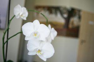 """""""Augalų labirintuose"""" – nuo orchidėjų iki vabzdžiaėdžių augalų"""
