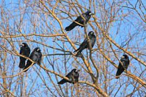 Bostone iš dangaus krito paukščiai