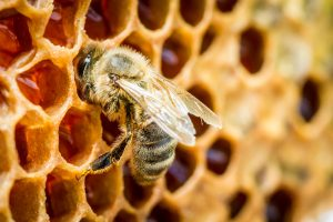 Medus gali būti klastingas