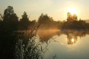 S. Paltanavičius: vasaros gamta turi ką dovanoti ir be liepų žiedų