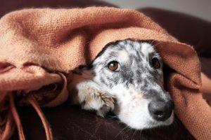 Girtas Veiviržėnų gyventojas žiauriai elgėsi su šunimi
