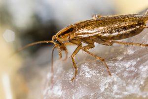 Jei namus užplūdo tarakonai