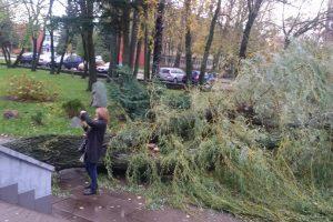 Per plauką nuo tragedijos: ant į mokyklą vedančio tako nuvirto medis