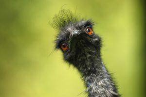 Dėl paukščių gripo Vokietijoje uždarytas zoologijos sodas