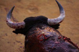 Katalonijoje atšauktas bulių kautynių draudimas