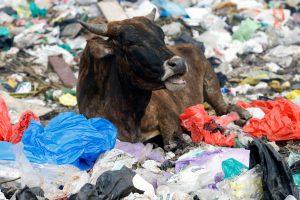 Už plastikinių maišelių naudojimą Kenijoje – 38 tūkst. JAV dolerių bauda
