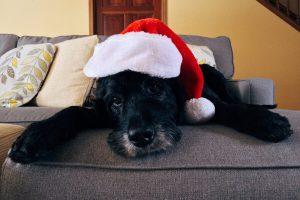 Fejerverkų triukšmas: kaip apsaugoti šunis?