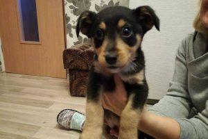 Į konteinerį išmestam šuniukui pareigūnė namus surado per feisbuką