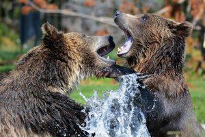 Aliaskoje meška sužeidė tris žygeivius