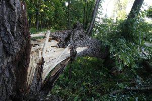 Nelaimė Kuršėnuose: žaibo pakirstas medis užvirto ant namo, apgadinta ir tvora