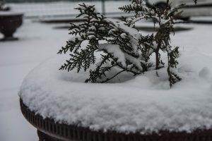 Tikrosios žiemos šiemet jau nesulauksime?