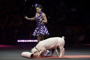 Artėjant kiaulės metams – ko dar apie jas nežinojote