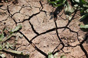 Pasaulis mini kovą su su dykumų plitimu ir sausra: Lietuvos žemdirbiai ją pralaimi