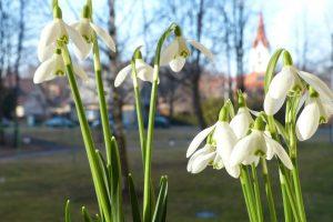 Kokie bus šio pavasario orai?