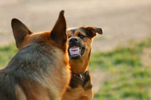 Kėdainiuose du šunys mirtinai sužalojo moterį