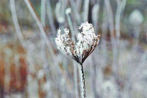 Į pajūrį atkeliauja žiemiški orai