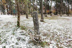 Už nukirstus medžius – 28 eurų bauda