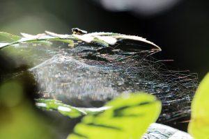Kuršių nerijoje – Voro metai