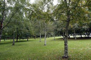 Susirūpino Ąžuolyno giraitės medžiais
