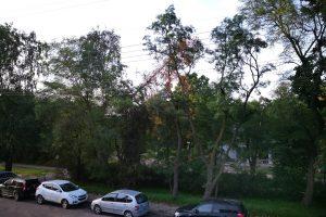 Pašalino pavojų kėlusią medžio viršūnę