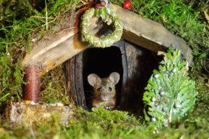 Miniatiūrinis kaimas pelėms