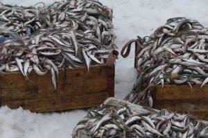 Baltijos jūroje – laisvesnė stintų žvejyba