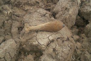 Žemę aręs vilkaviškietis rado pavojingą sprogmenį
