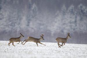 Gyvūnams žiema kol kas nebaisi