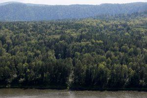 Rusijos pareigūnai ieško Sibiro taigoje dingusių penkių vaikų