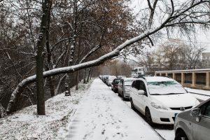 Šalčininkuose ir Druskininkuose ant automobilių užvirto medžiai