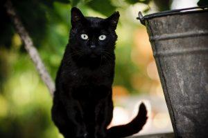 Kaune – dovana kačių mylėtojams