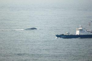 Japonija iš skęstančio laivo išgelbėjo 26 Šiaurės Korėjos piliečius