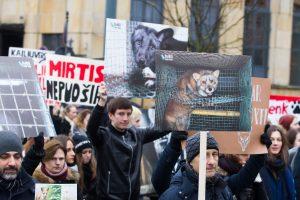 Visuomenininkų akcijas dėl skriaudžiamų gyvūnų augintojai sieja su rinkimais