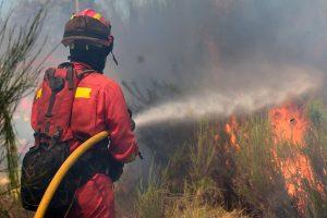 Italijoje ugniagesys dėl adrenalino padeginėjo miškus
