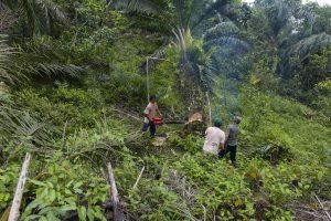 Indonezija už rusiškus naikintuvus atsiskaitys palmių aliejumi?