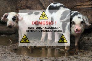 Lietuvoje užfiksuotas jau 50-tas šiemet kiaulių maro židinys