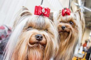 Mokslininkai: šunys gali kontroliuoti savo snukio išraišką