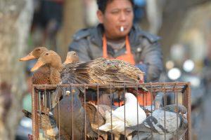 Kinijoje uždaromi gyvų paukščių turgūs