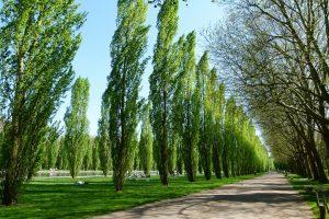 Prancūzijos viešose žaliosiose zonose bus uždrausti pesticidai