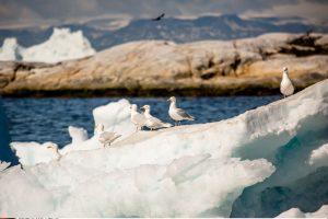 Grenlandijoje – grėsmingi oro temperatūros rekordai