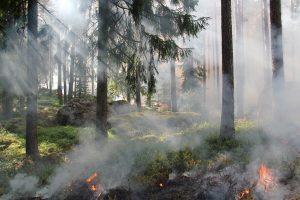 Dėl didelio gaisrų pavojaus uždrausta lankytis kai kuriuose miškuose