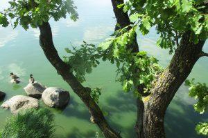 Pažaliavęs ir dvokiantis Kauno marių vanduo nuo maudynių atbaido ne visus