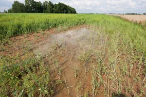 Ūkininkai negali išvežti srutų į užtvindytus laukus