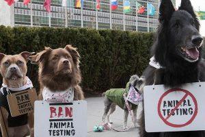 Istorinis protestas: prieš žiaurų elgesį su gyvūnais į gatves išėjo šunys