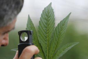 Narkotikų atsisiuntimas: griežtai baus ir dėl didelio kiekio kokaino, ir dėl suktinės
