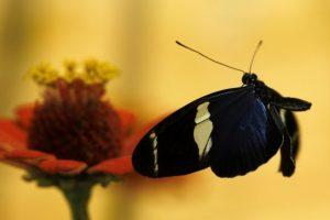 Gėlininkės patarimai ruošiantis puošti darželius