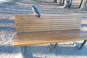 Kalniečių parke suolelius apdergė paukščiai, stalus aprašinėjo žmonės