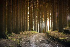 S. Paltanavičius: prieš šimtmetį Lietuvos gamta atrodė kitaip